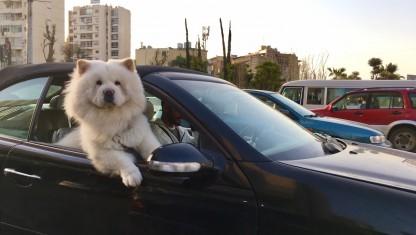 Transport i Libanon er ligetil og utilregnelig