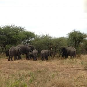 Støv og bumlebus - Rejsen til Nkwenda